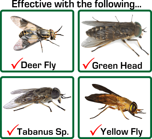 Kills Deer Fly, Green Head, Tababus Sp., Yellow Fly