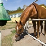 Is Equine Infectious Anemia Rearing Its Ugly Head in Your Area?